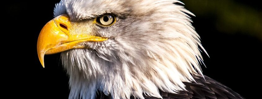 Bald eagle stolen from refuge