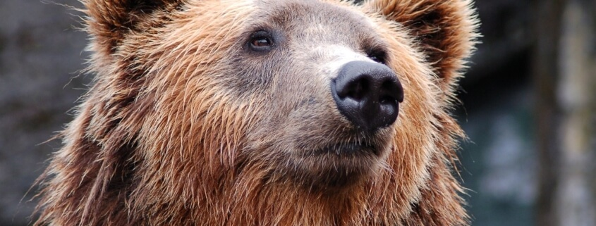 Bear euthanized