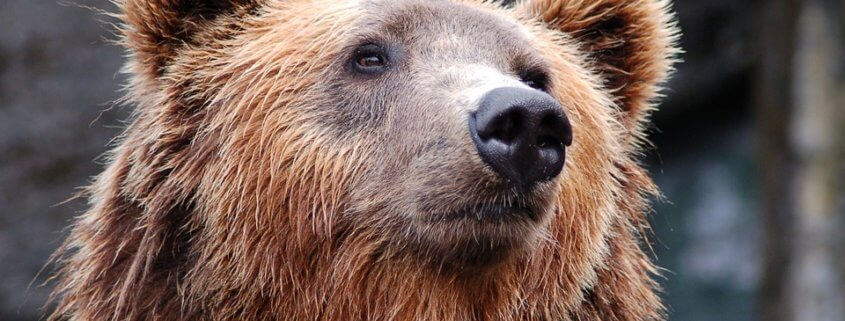 Bear killed - hunter overdosed on drugs