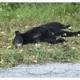 Bear shot illegally