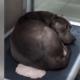 beautiful sad unwanted dog