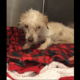 Bedraggled stray needs a home
