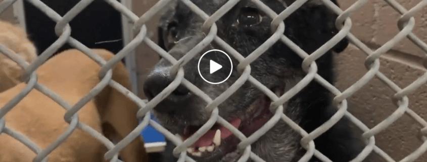 Dog betrayed by family