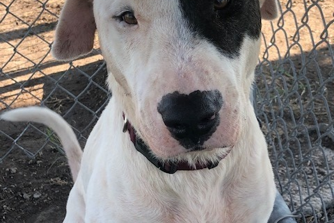 Fred is beyond urgent at shelter