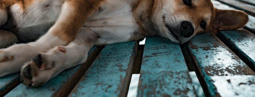 Bill introduced to make animal cruelty a federal felony
