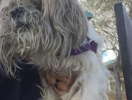 Blind dog rescued