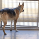 Blind shepherd adopted and returned