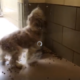 Blind dog at busy shelter