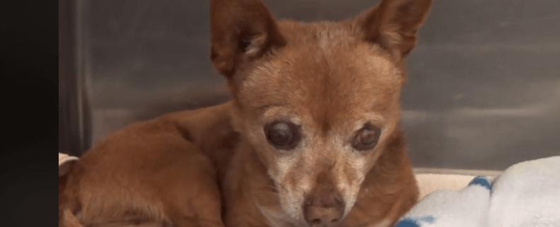 Blind stray dog
