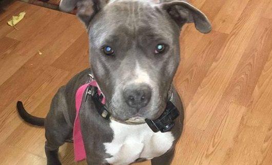 Reward offered after dog found shot and bound