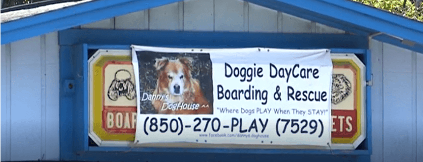 Dogs rescues from boarding/rescue facility