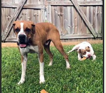 Bonded dogs forgotten in boarding