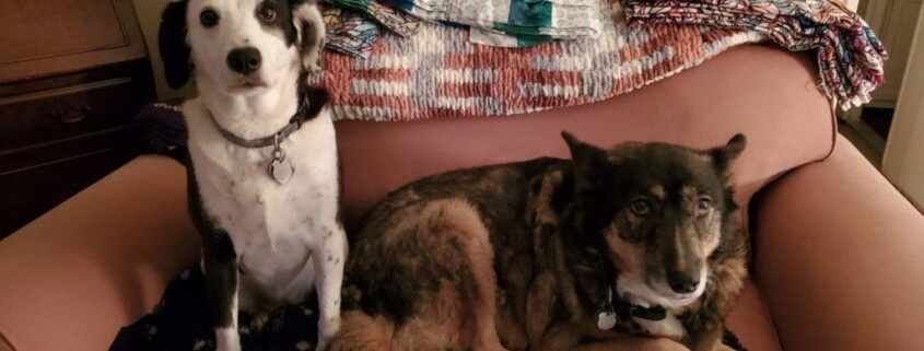 Bonded dogs homeless after owner died