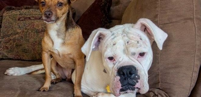 Bonded odd couple needs a home together