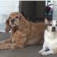 Bonded senior dogs