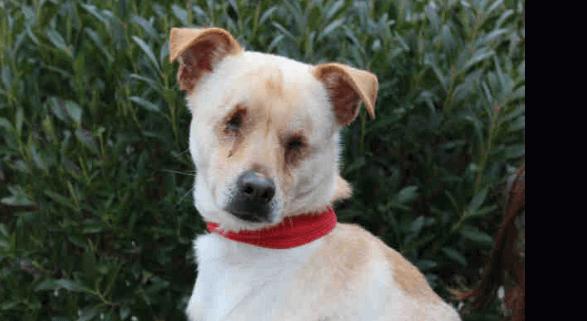 dog born with no eyes