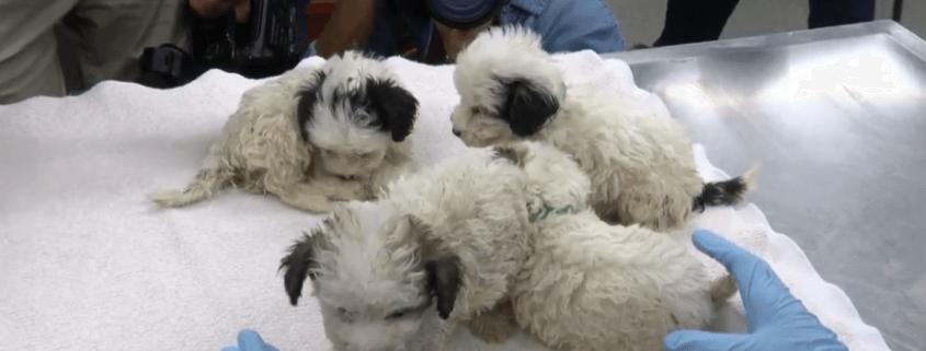 Breeding operation shut down