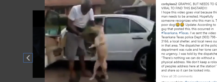 arrest expected in brutal dog beating