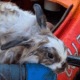 Bunny found tied to a weight with a rope