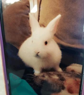 Bunny killed