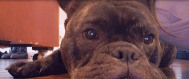 burglar stole family's dog