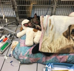 Burned dog fights for survival
