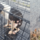 Caged dog found in lake