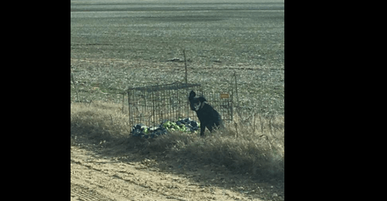 Caged puppy abandoned on rural road