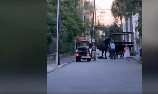 Carriage horse suffered fatal injuries