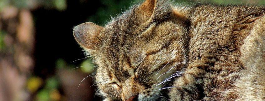 Update on Hemingway cats