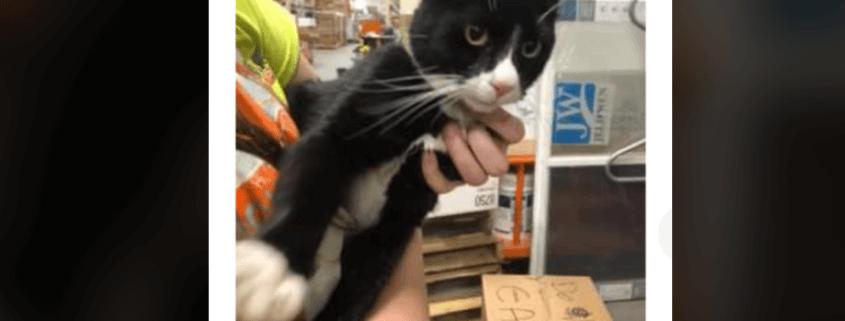 Cat found in Alaska