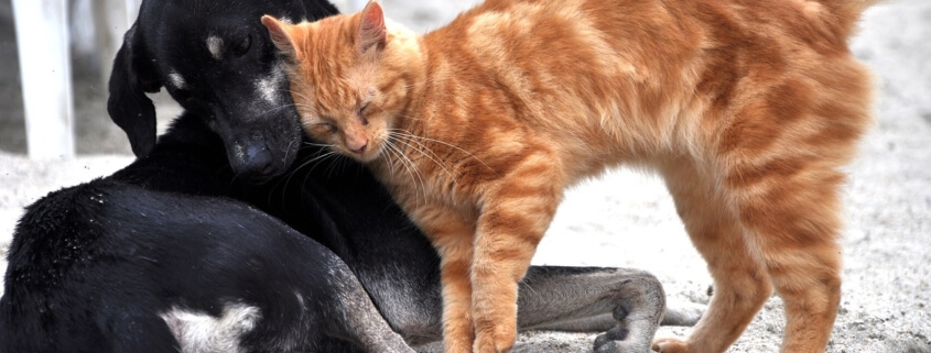 man claims he ate hearts of cat and dog