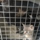 Mother cat and her kittens crated and thrown into the trash