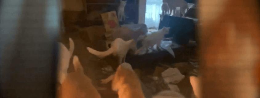 dozens of cats euthanized
