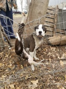 chained dog hopeless tangled