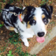 Puppy died after being injured at boarding facility