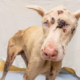 Charges reduced for man who starved dog