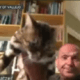Commissioner in CA resigns after throwing cat in Zoom meeting
