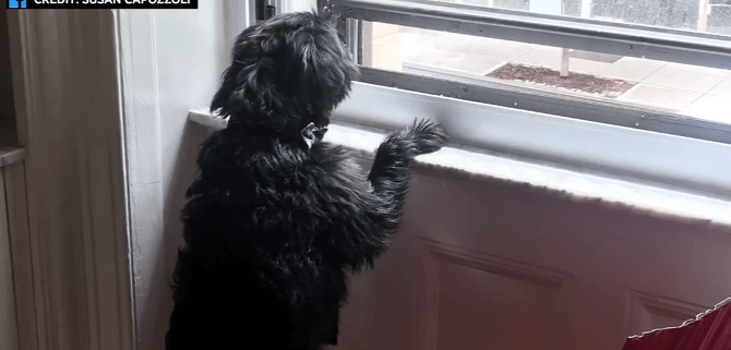 Clever dog opened window during fire