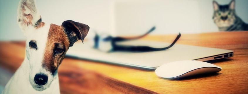 Pet Insurance a workplace perk