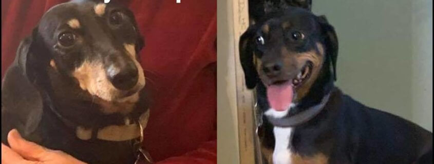 Dogs in need of a new home after owner died