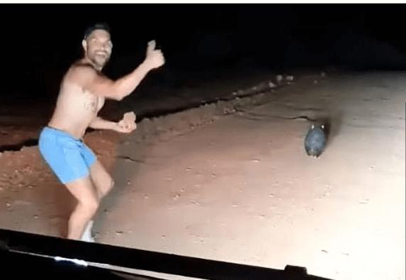 Cop killed wombat
