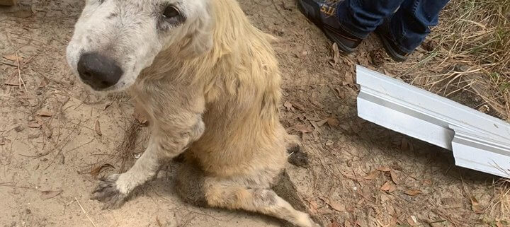 Couple charged after dogs found chained to trees and crammed in pens