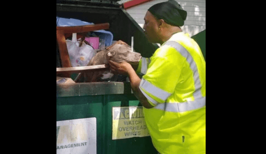 Crated dog thrown into dumpster
