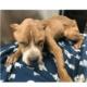 Critically urgent - dog needs to be saved
