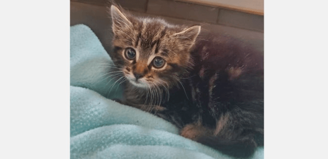 Cruelty investigation - kitten killed after being abandoned
