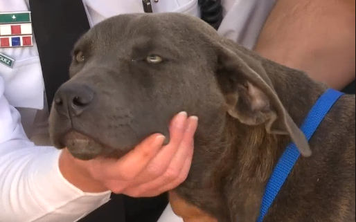 Dog to be adopted after being shot and left for dead