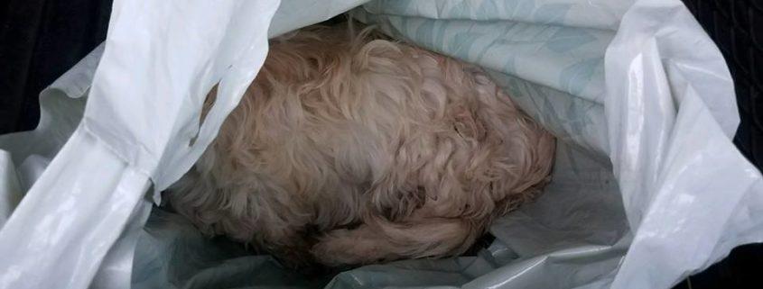Dead dog found in Walmart bag