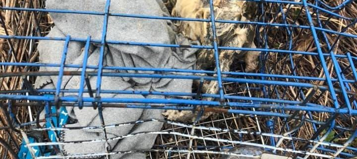 Dead dog found in blue cage