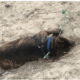 Dead dog found tied to a pole